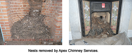 nests removed by Apex Chimney Services London