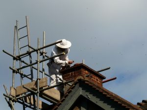 Apex Chimney Sweeps Nest Clearing London