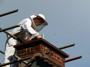 Chimney sweeps also clear wasp and birds nests